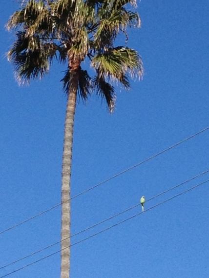 Birds of Playa